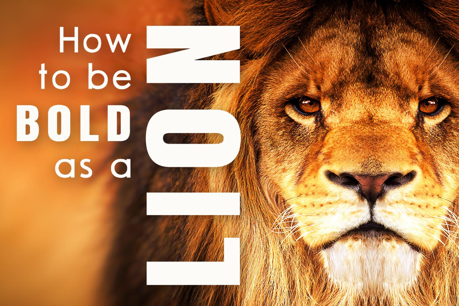 How to Be Bold as a Lion